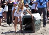 Pamela Anderson | Supporting PETA at Malibu Beach | May 2 | 14 pics